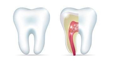 diagram of tooth | root canals matairie la
